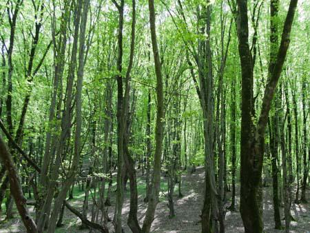 Lush green forest of Nahar Khoran